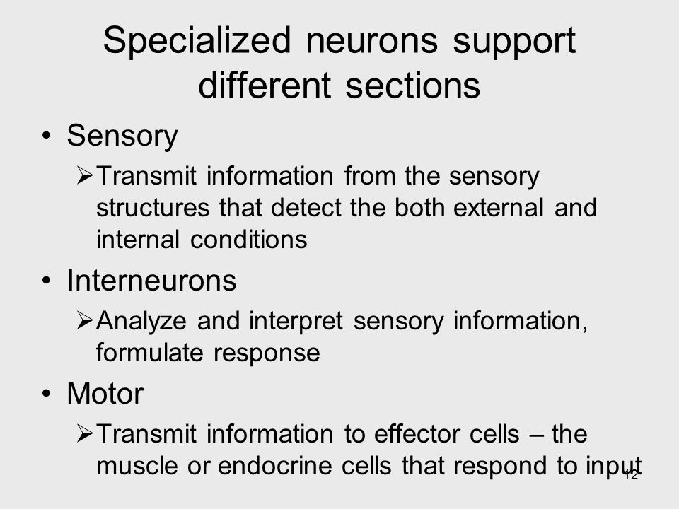 Specialized neurons support different sections