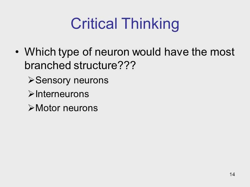 Critical Thinking Which type of neuron would have the most branched structure Sensory neurons. Interneurons.