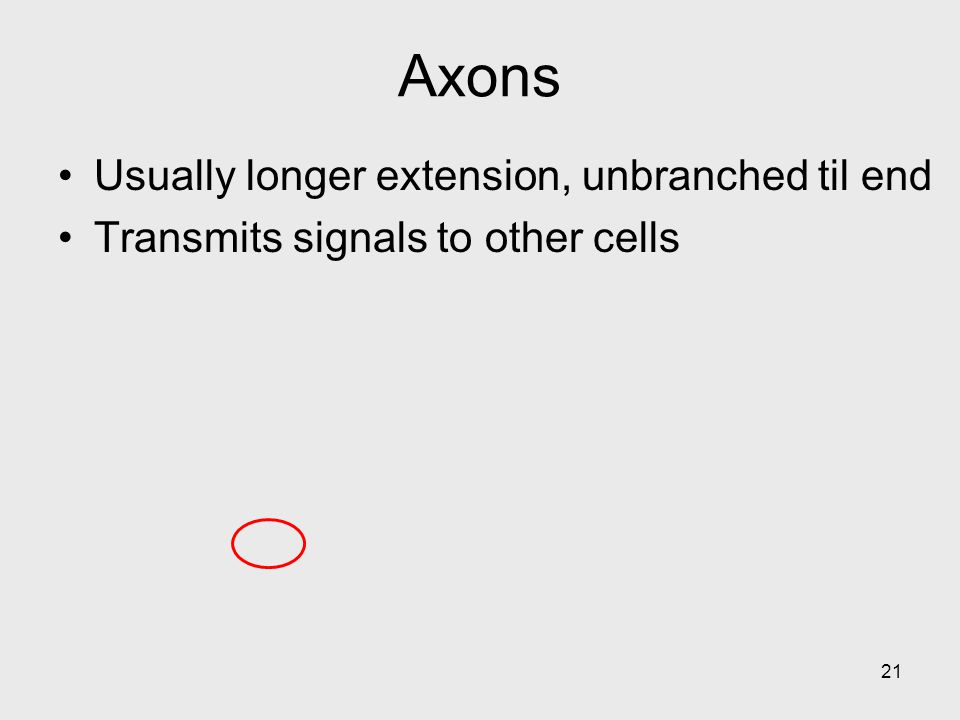 Axons Usually longer extension, unbranched til end