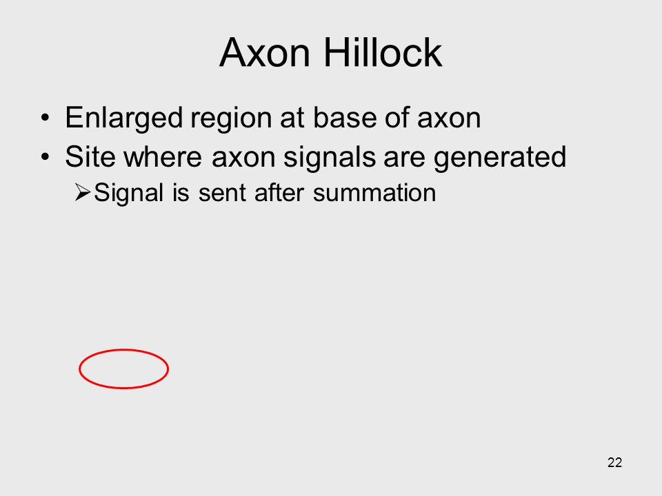 Axon Hillock Enlarged region at base of axon