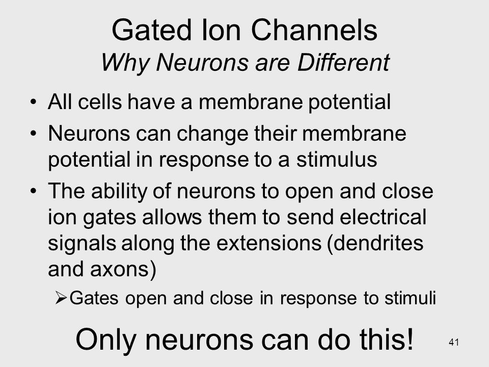 Gated Ion Channels Why Neurons are Different