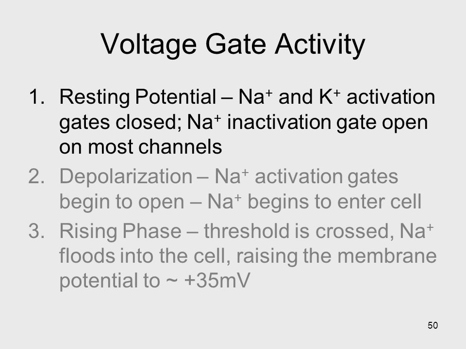 Voltage Gate Activity Resting Potential – Na+ and K+ activation gates closed; Na+ inactivation gate open on most channels.