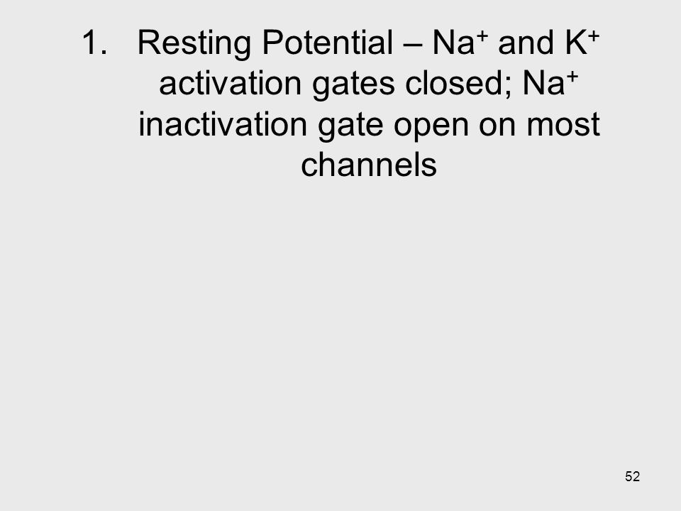 Resting Potential – Na+ and K+ activation gates closed; Na+ inactivation gate open on most channels