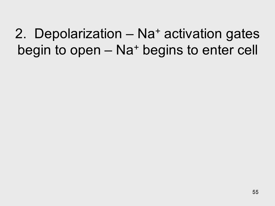 2. Depolarization – Na+ activation gates begin to open – Na+ begins to enter cell