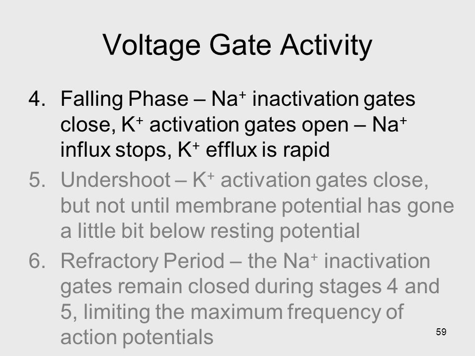 Voltage Gate Activity Falling Phase – Na+ inactivation gates close, K+ activation gates open – Na+ influx stops, K+ efflux is rapid.