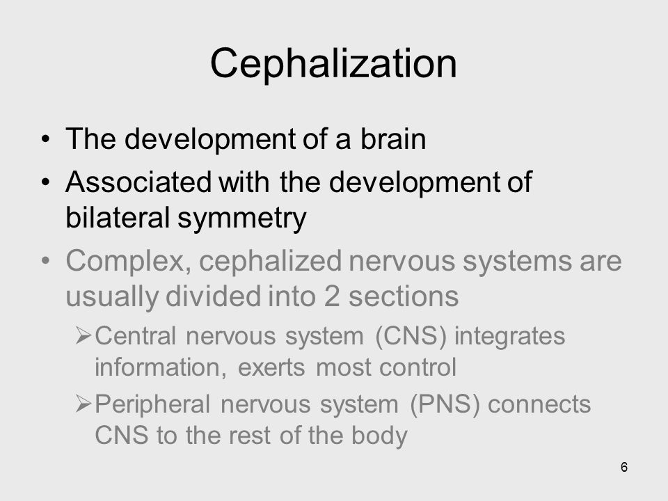 Cephalization The development of a brain