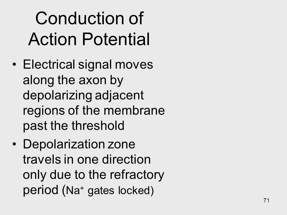 Conduction of Action Potential