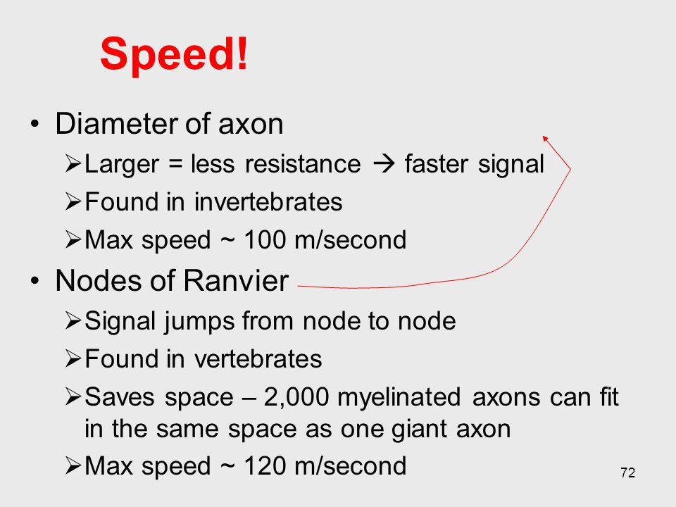 Speed! Diameter of axon Nodes of Ranvier