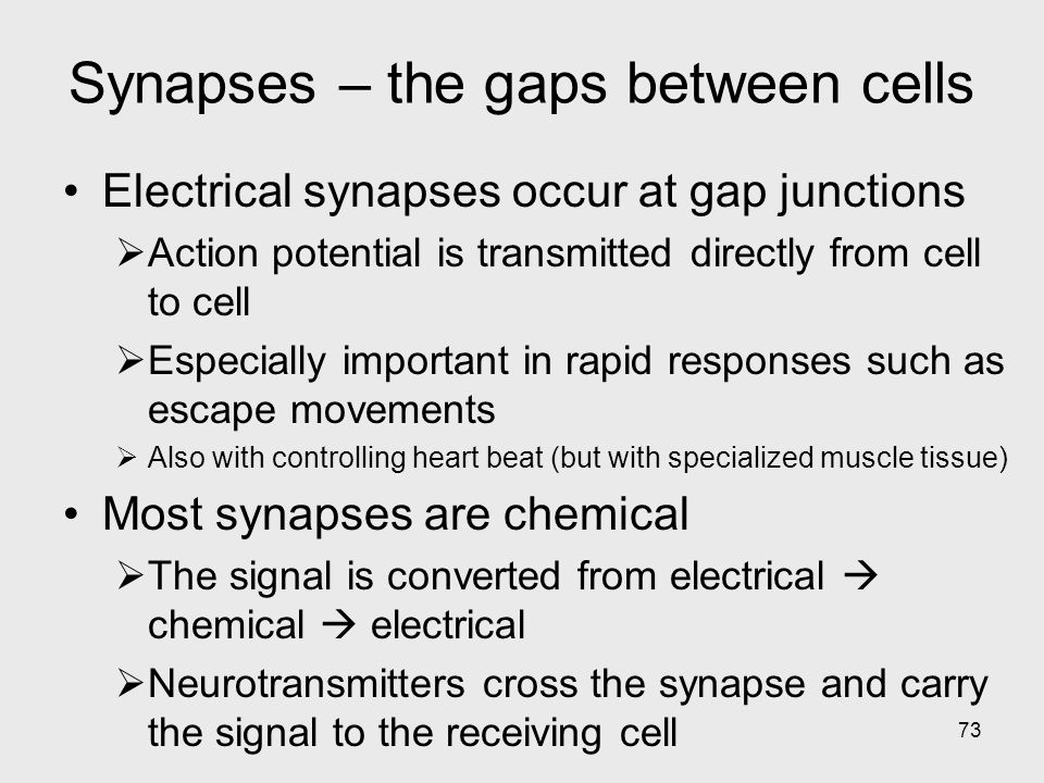 Synapses – the gaps between cells
