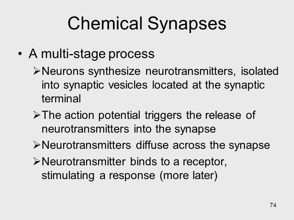 Chemical Synapses A multi-stage process