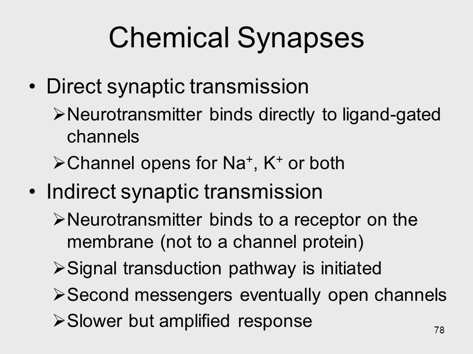 Chemical Synapses Direct synaptic transmission