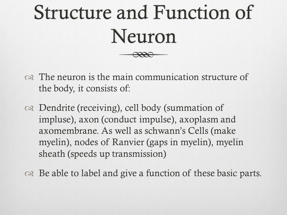 Structure and Function of Neuron