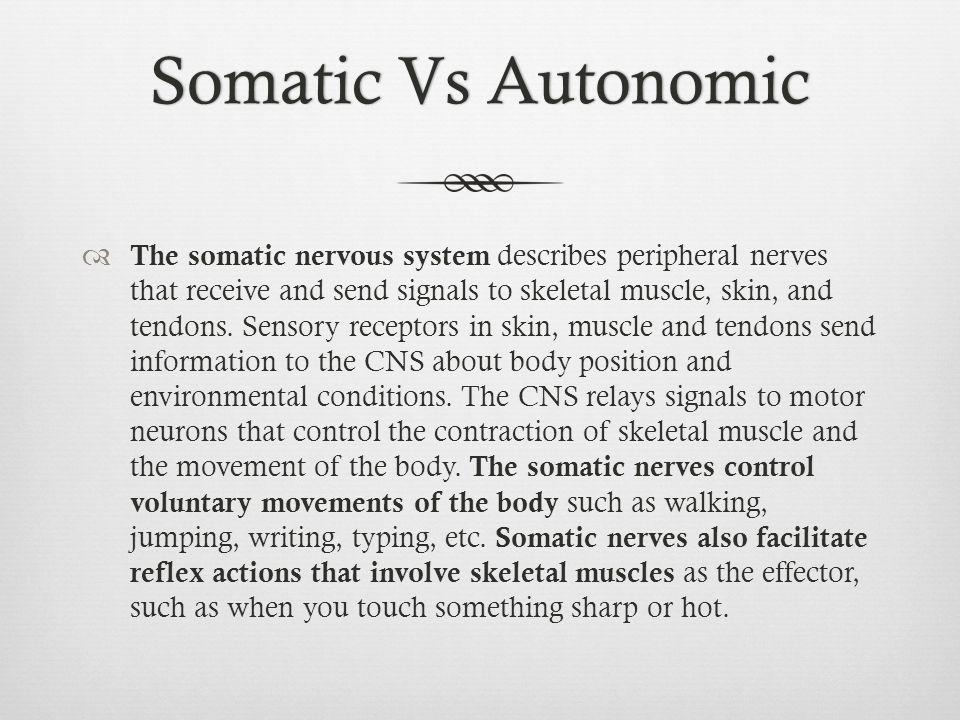 Somatic Vs Autonomic