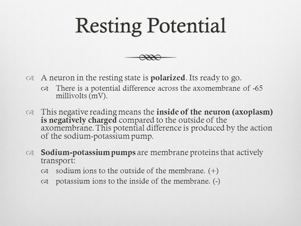 Resting Potential A neuron in the resting state is polarized. Its ready to go.