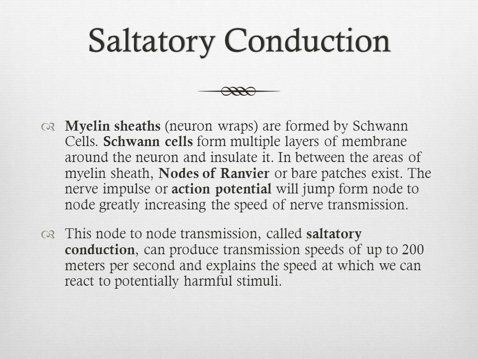 Saltatory Conduction
