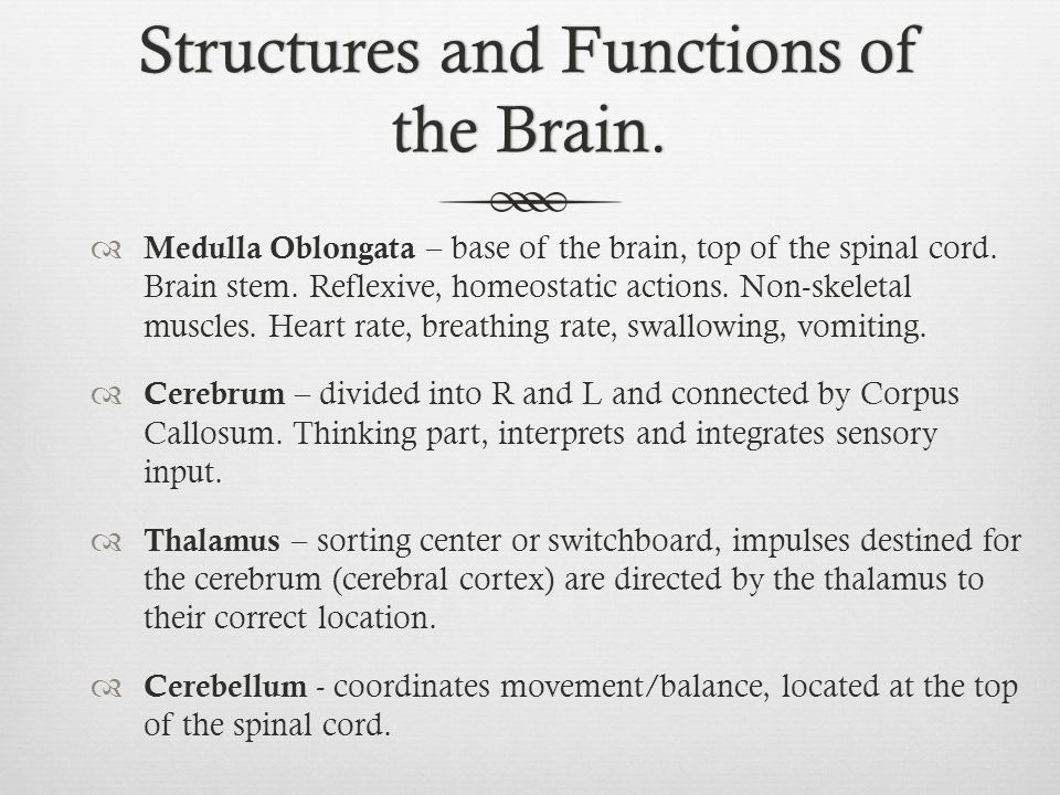 Structures and Functions of the Brain.
