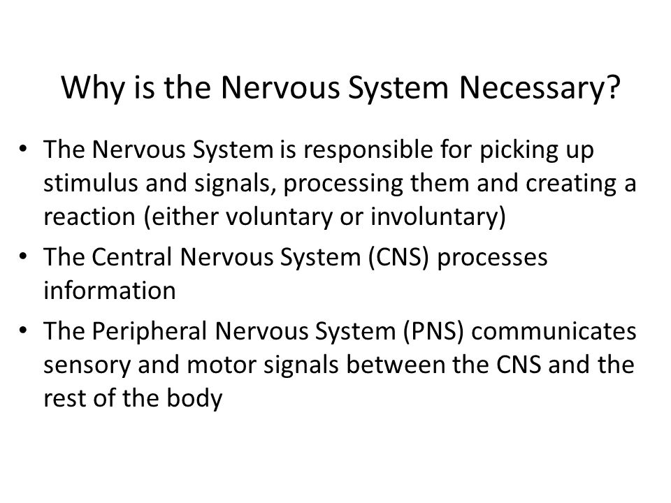 Why is the Nervous System Necessary