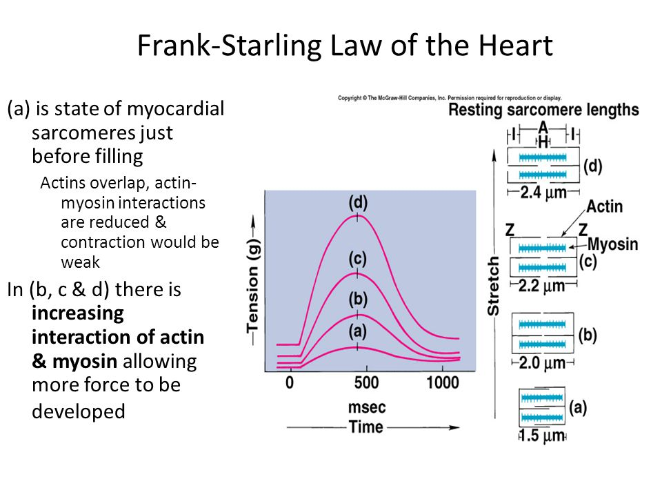 Frank-Starling Law of the Heart