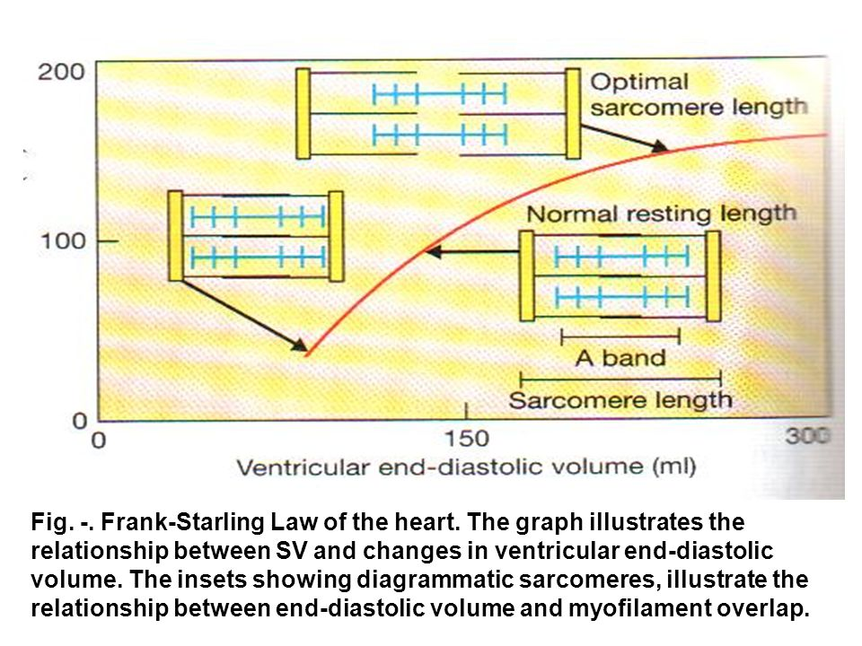 Fig. -. Frank-Starling Law of the heart