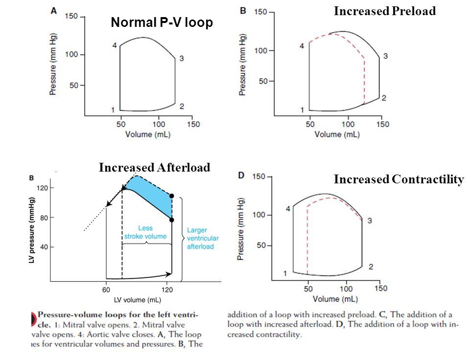 Increased Preload Normal P-V loop Increased Afterload Increased Contractility