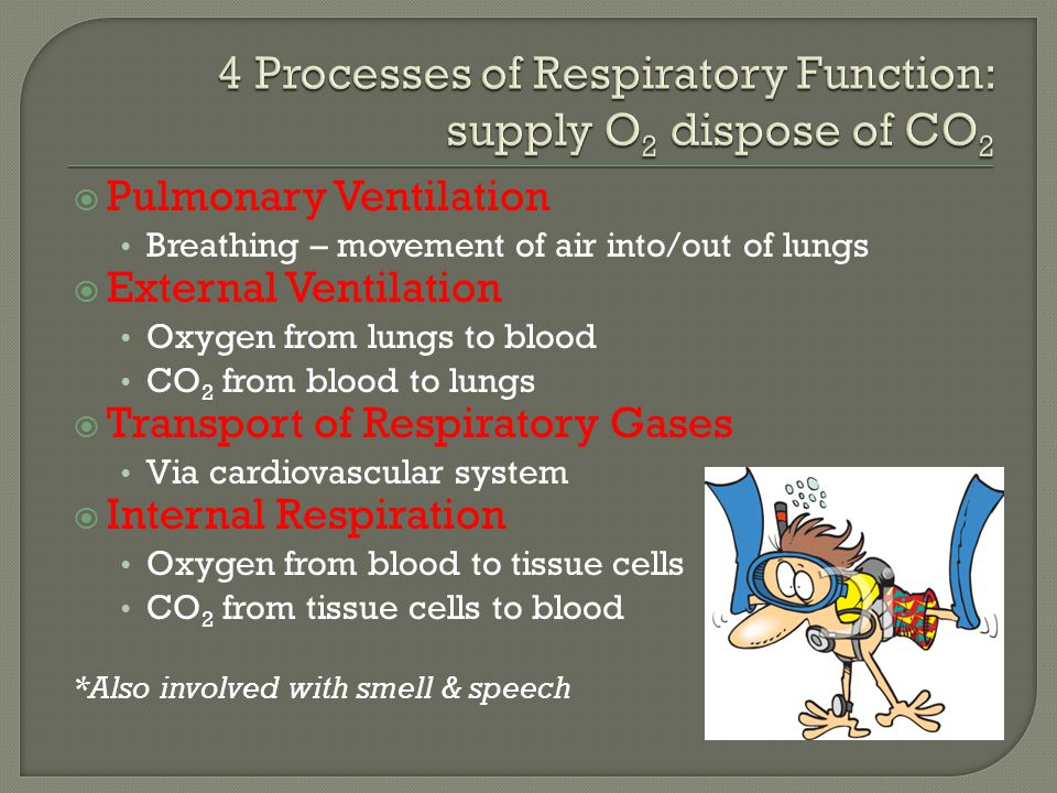 4 Processes of Respiratory Function: supply O2 dispose of CO2