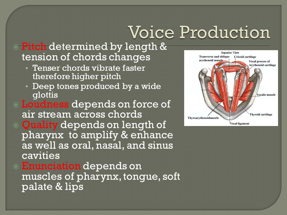 Voice Production Pitch determined by length & tension of chords changes. Tenser chords vibrate faster therefore higher pitch.