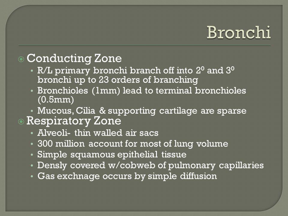 Bronchi Conducting Zone Respiratory Zone