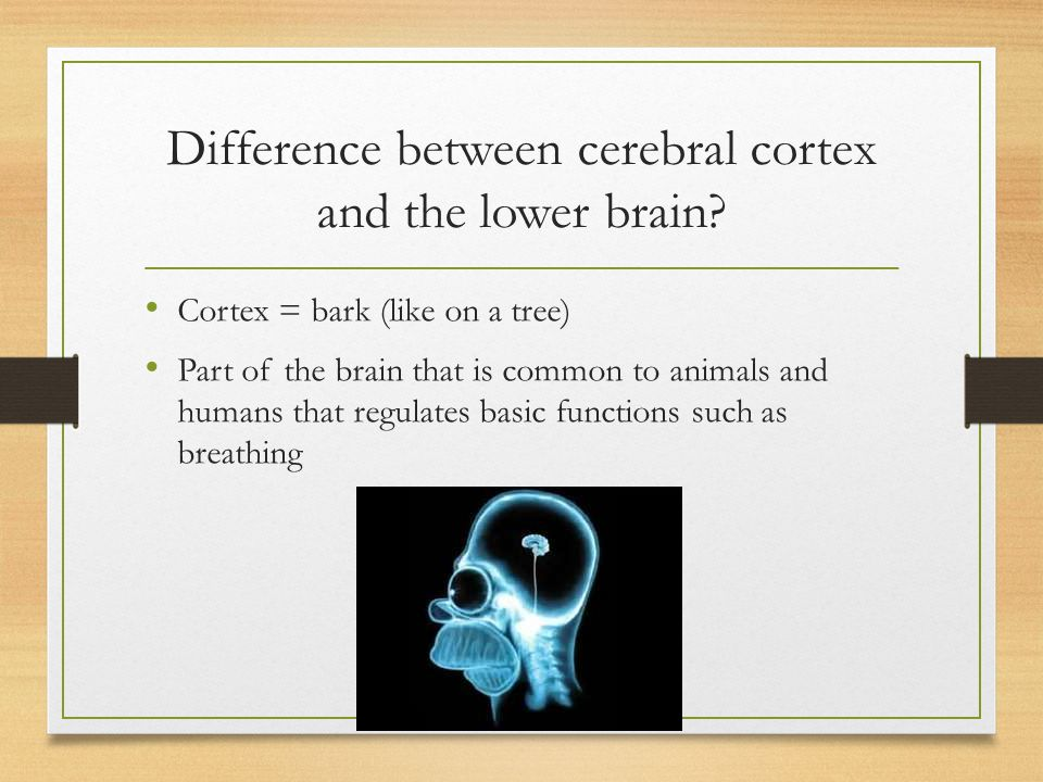 Difference between cerebral cortex and the lower brain
