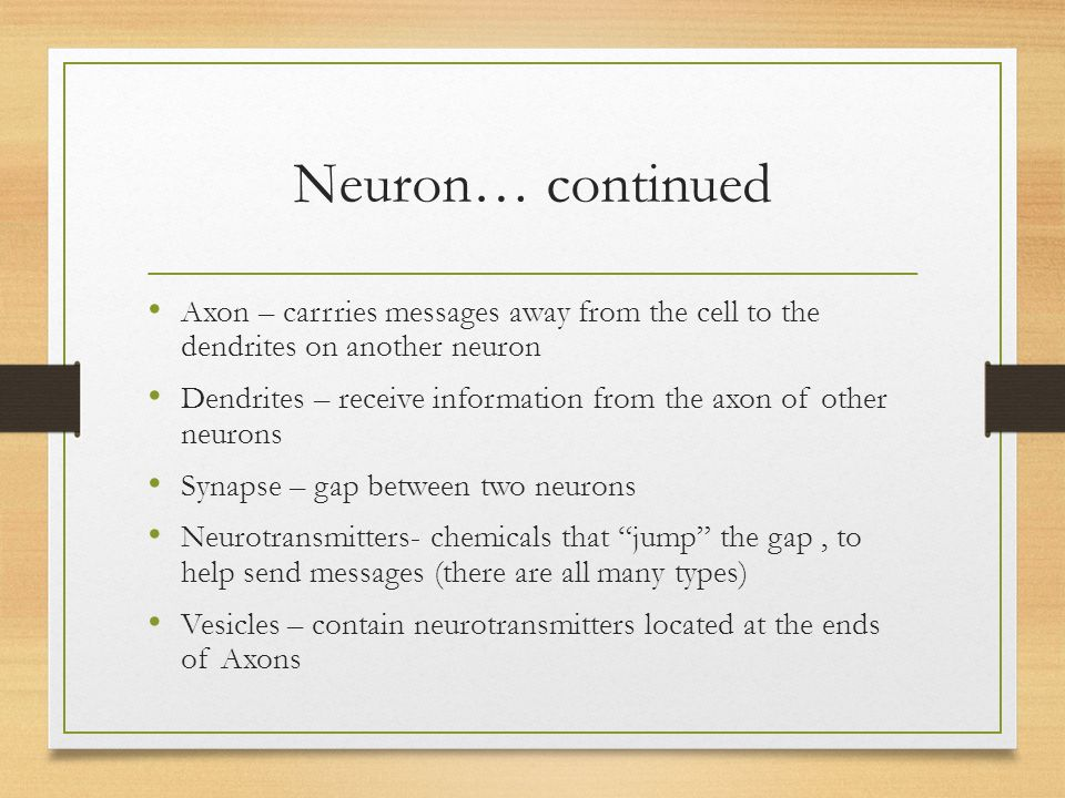 Neuron… continued Axon – carrries messages away from the cell to the dendrites on another neuron.