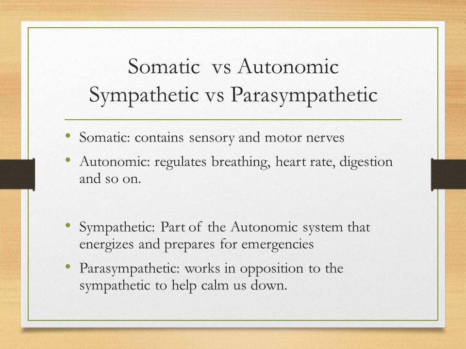 Somatic vs Autonomic Sympathetic vs Parasympathetic