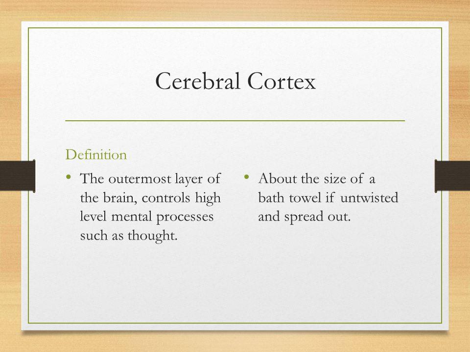 Cerebral Cortex Definition