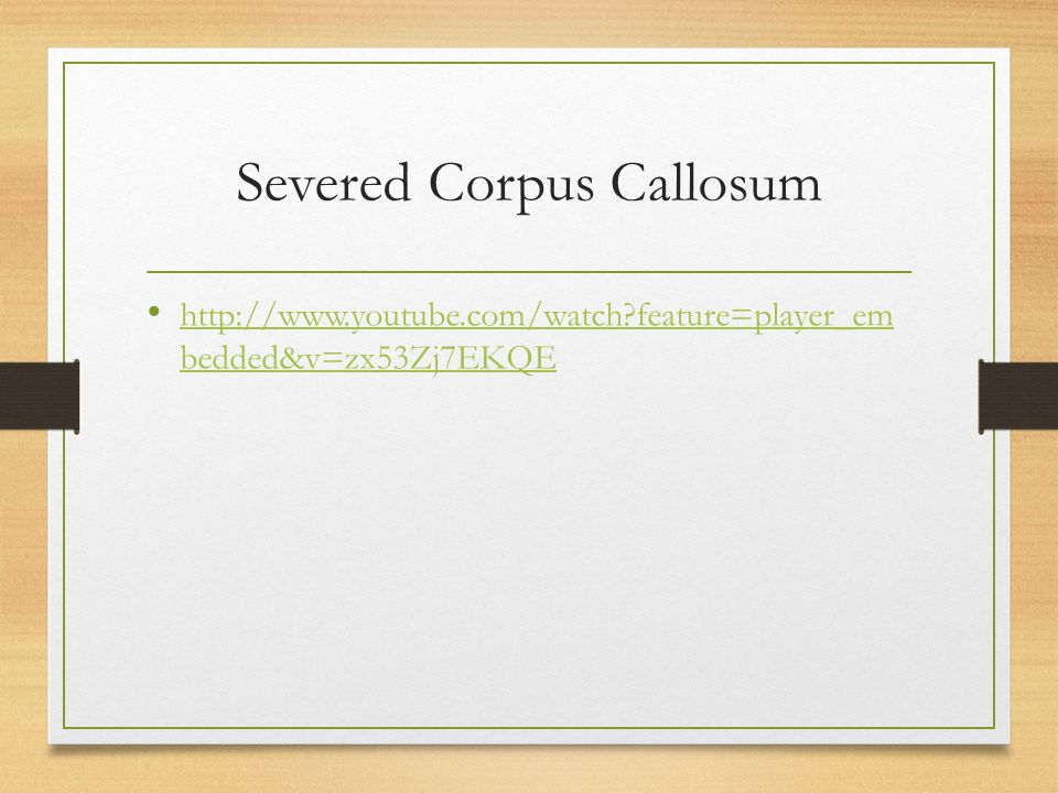 Severed Corpus Callosum