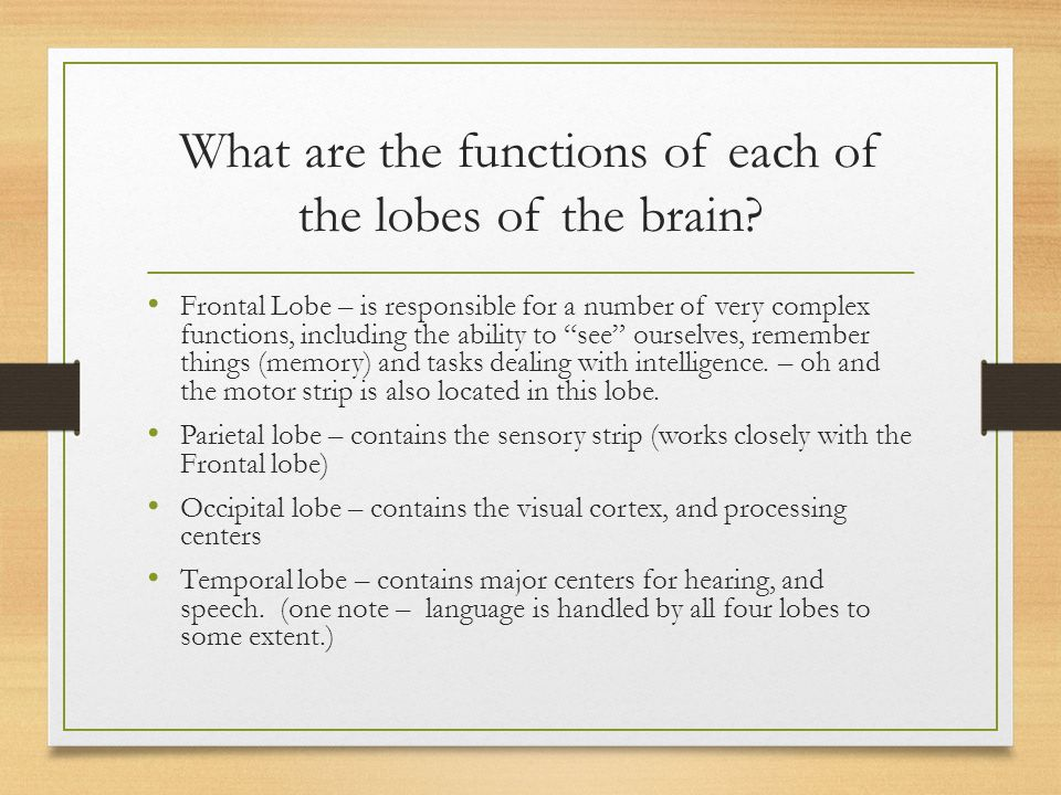 What are the functions of each of the lobes of the brain