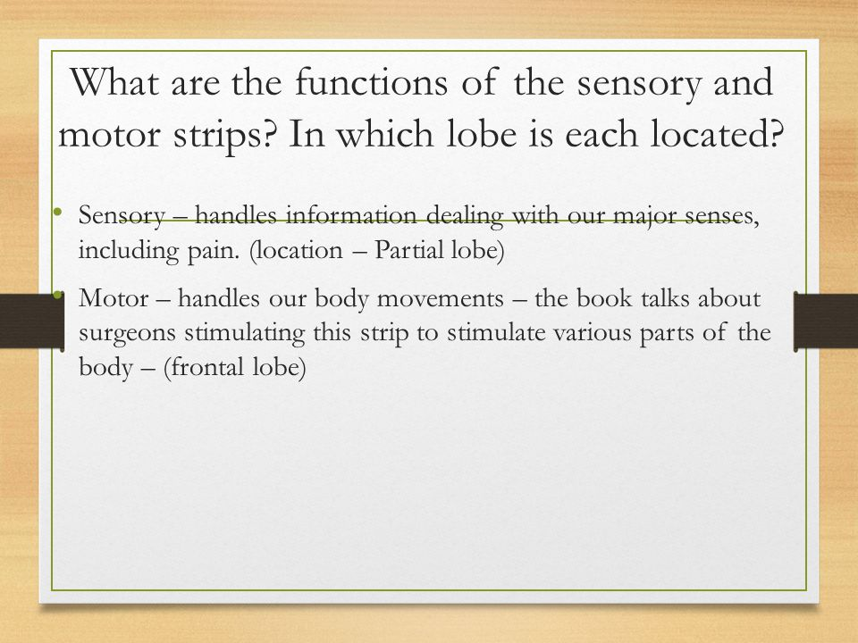 What are the functions of the sensory and motor strips