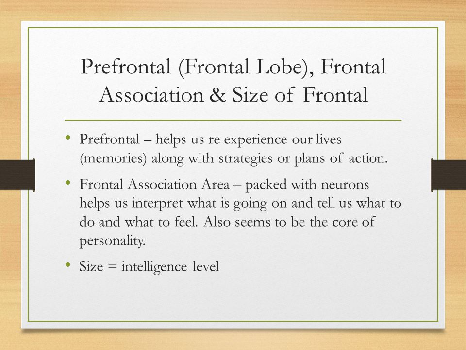 Prefrontal (Frontal Lobe), Frontal Association & Size of Frontal