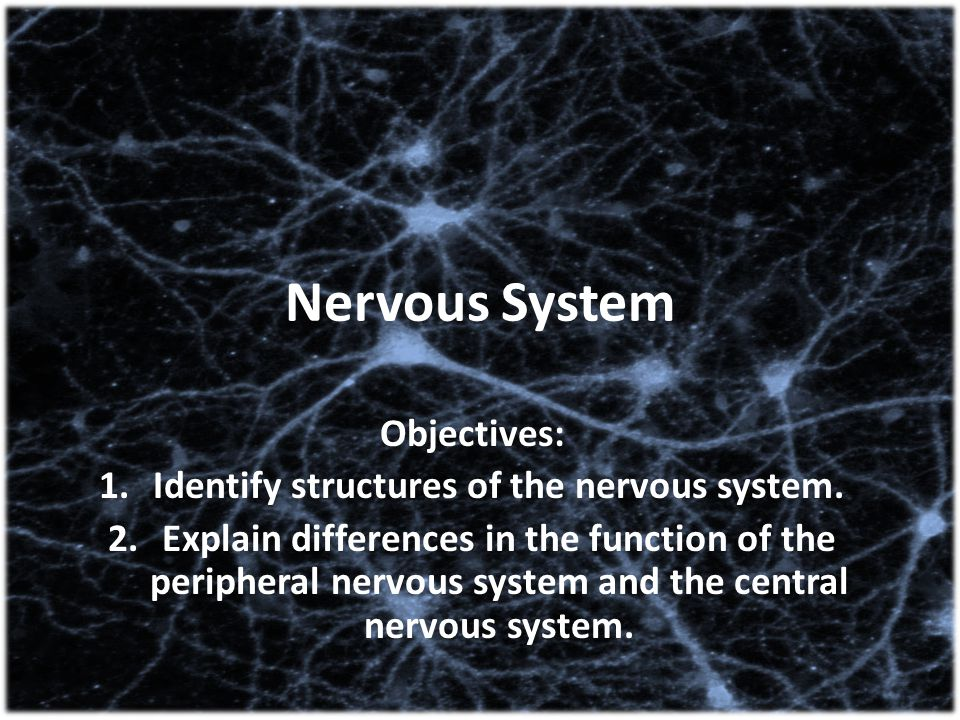 Identify structures of the nervous system.