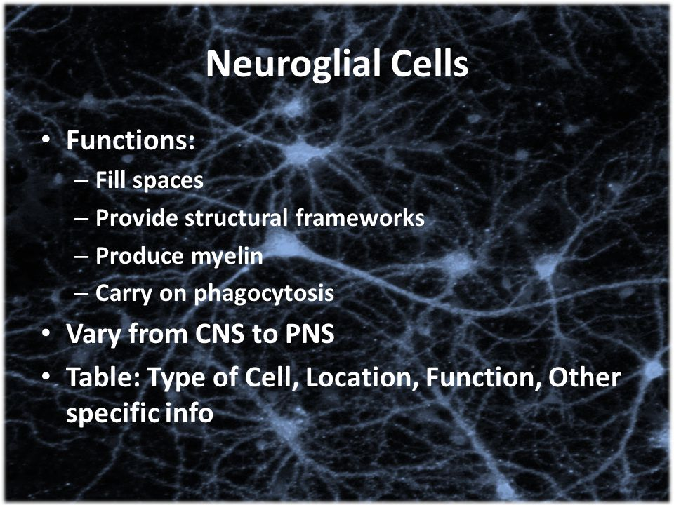 Neuroglial Cells Functions: Vary from CNS to PNS