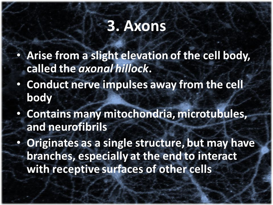 3. Axons Arise from a slight elevation of the cell body, called the axonal hillock. Conduct nerve impulses away from the cell body.