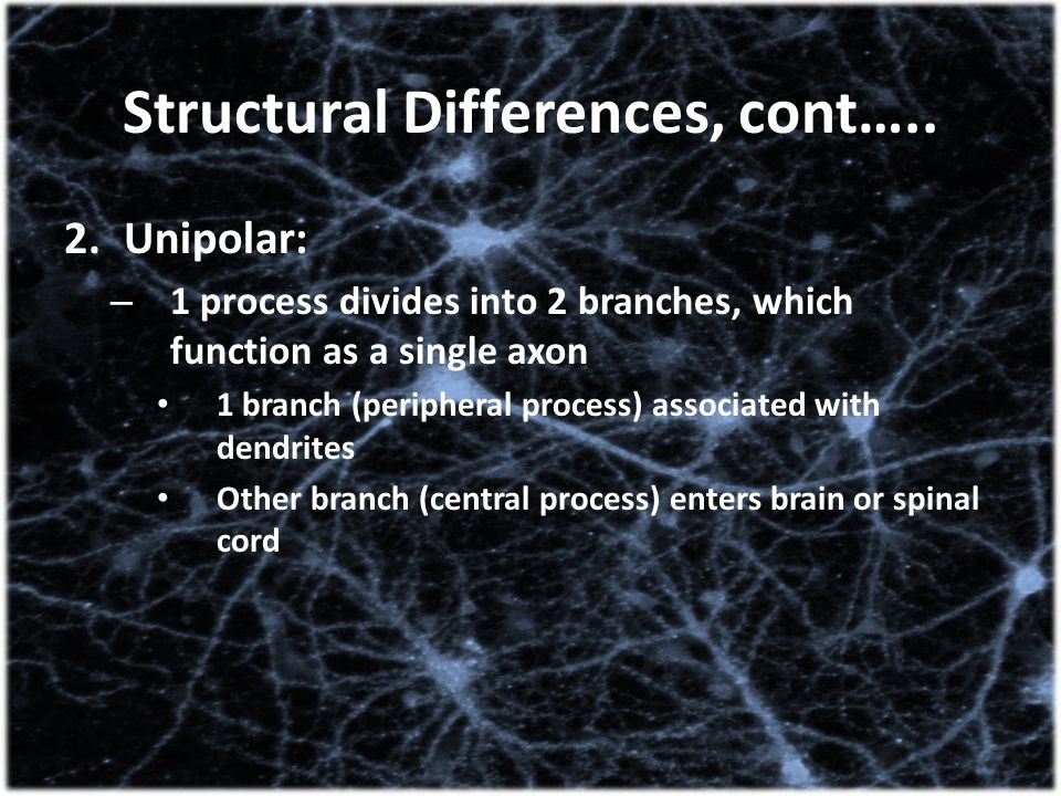 Structural Differences, cont…..