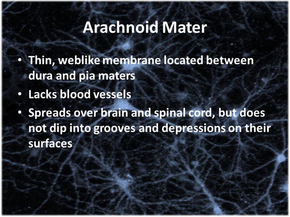 Arachnoid Mater Thin, weblike membrane located between dura and pia maters. Lacks blood vessels.