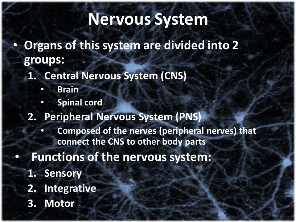 Nervous System Organs of this system are divided into 2 groups: