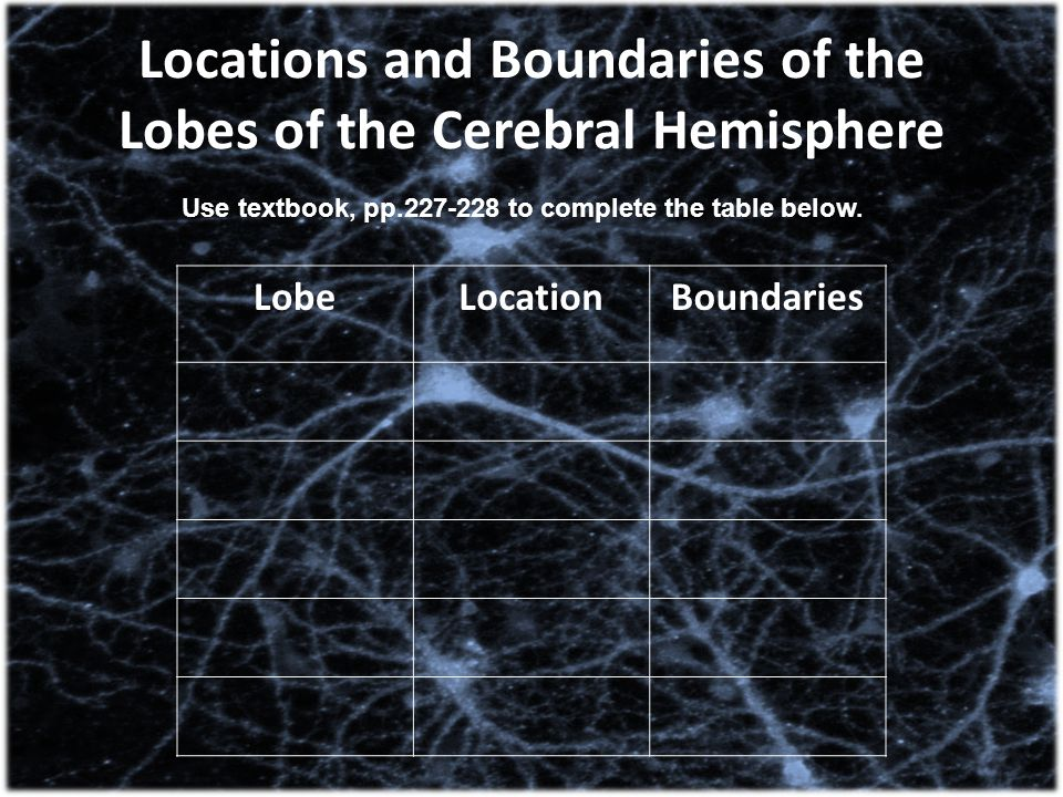 Locations and Boundaries of the Lobes of the Cerebral Hemisphere