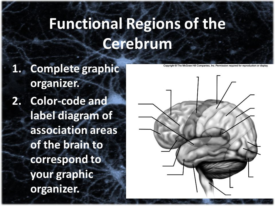 Functional Regions of the Cerebrum
