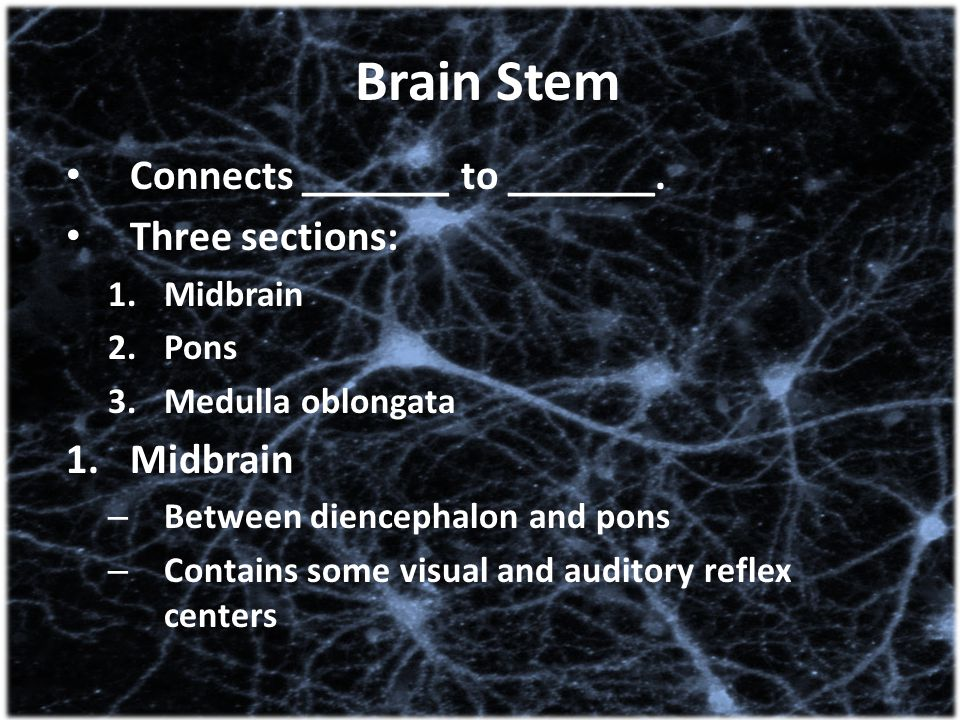 Brain Stem Connects _______ to _______. Three sections: Midbrain Pons