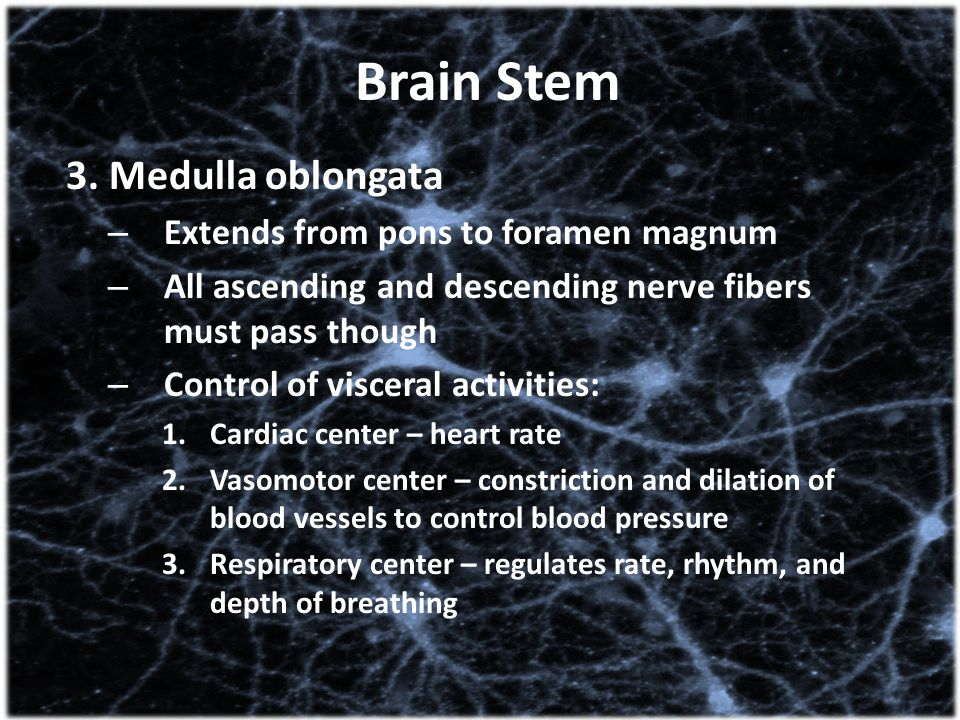 Brain Stem 3. Medulla oblongata Extends from pons to foramen magnum