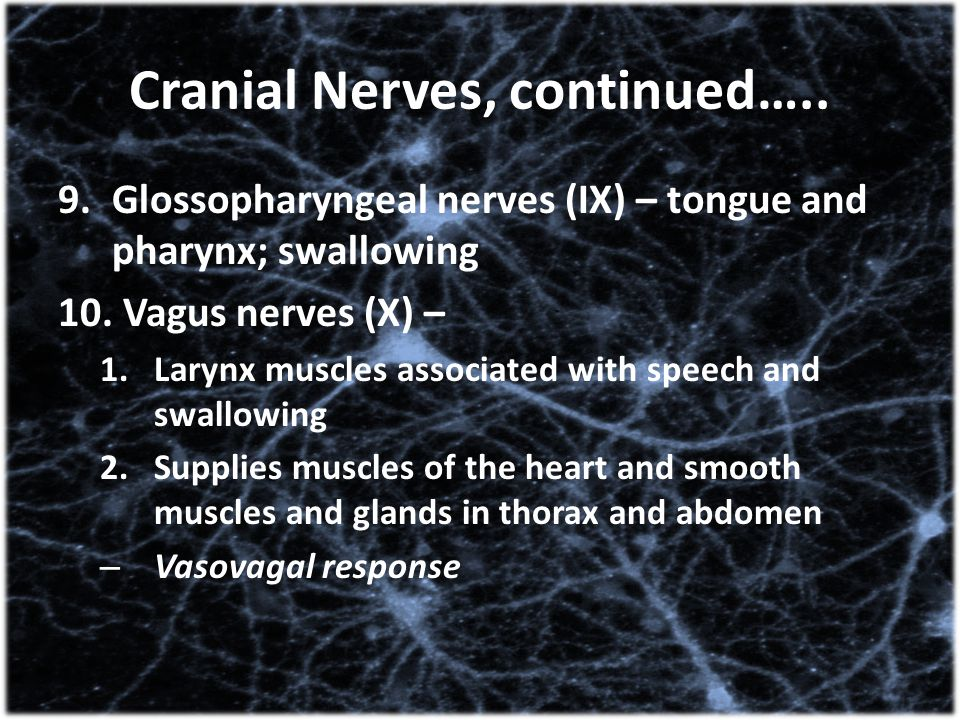 Cranial Nerves, continued…..
