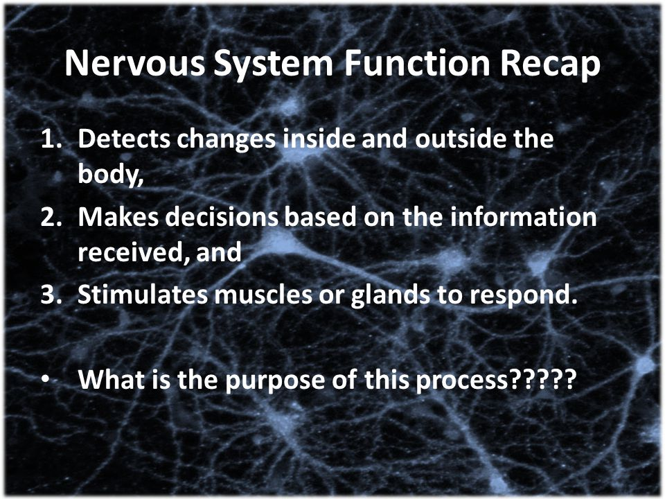 Nervous System Function Recap