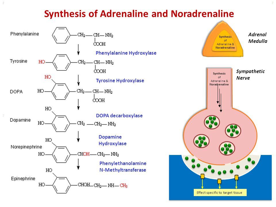 Synthesis of Adrenaline and Noradrenaline