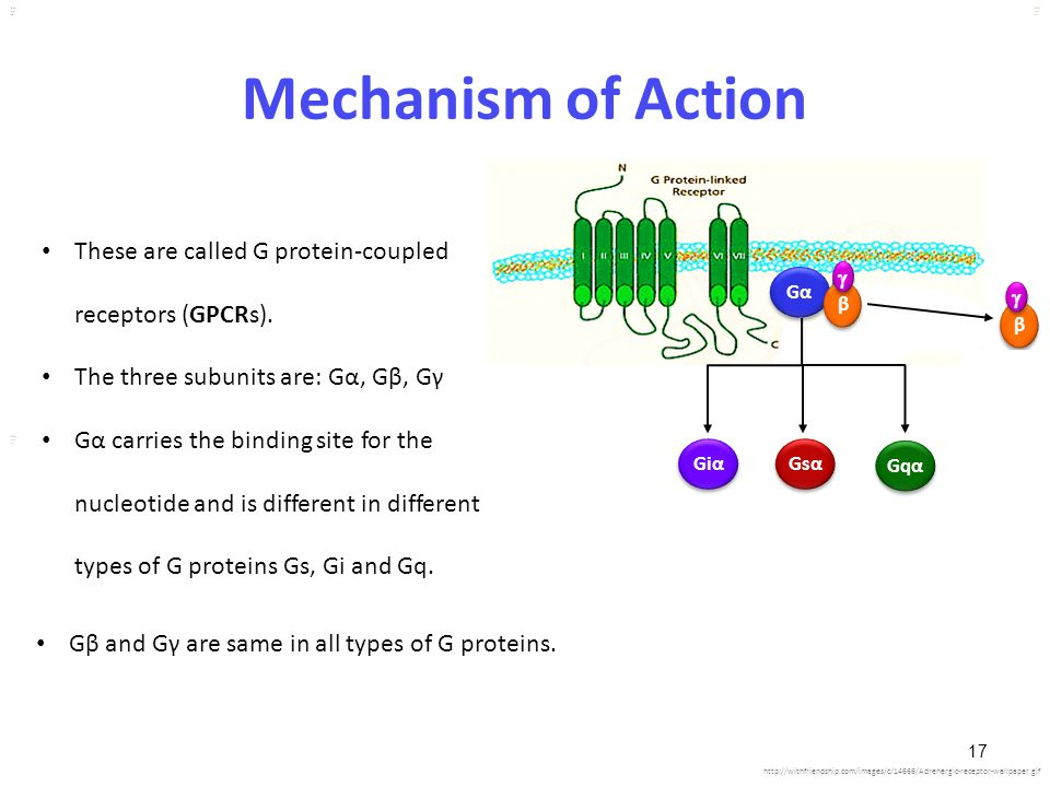 Mechanism of Action These are called G protein-coupled receptors (GPCRs). The three subunits are: Gα, Gβ, Gγ.