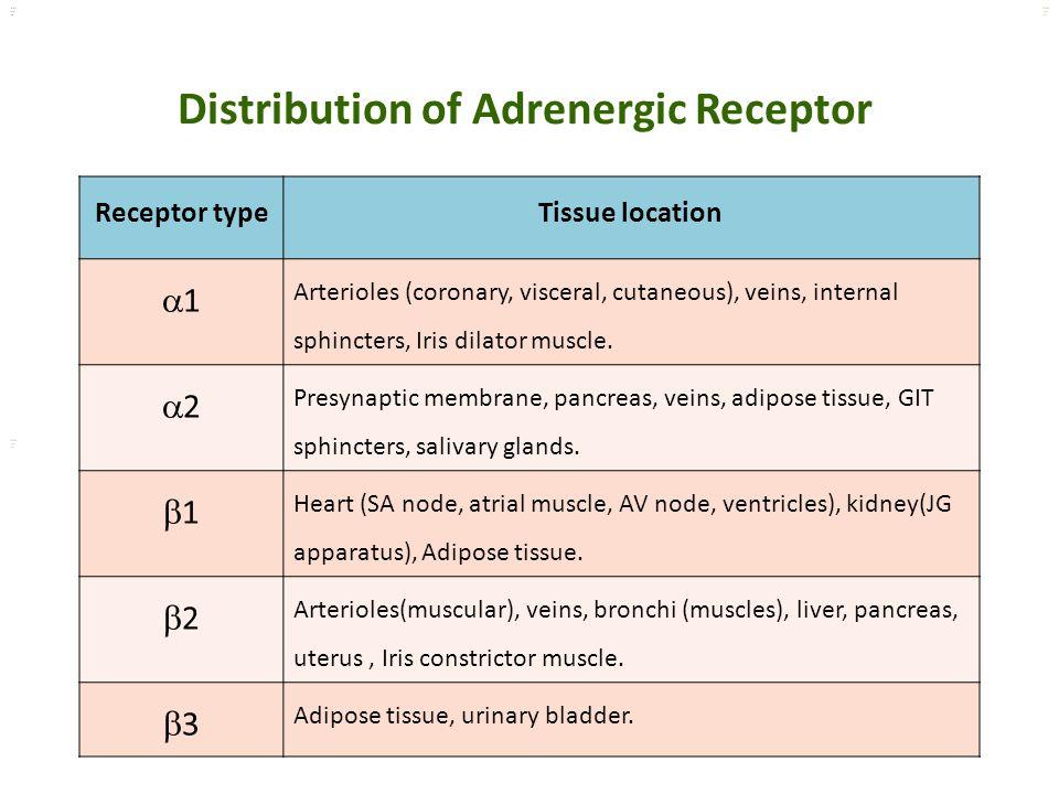 Distribution of Adrenergic Receptor
